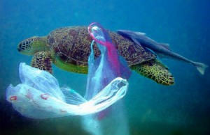 plasticbagsturtle1